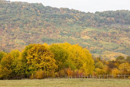 Bétail, campagne, concept de liberté. Le pâturage de gree est clôturé avec la clôture faible faite des branches et des bâtons, il a fini avec la forêt multicolore, qui se développe sur la montagne Banque d'images - 92923628