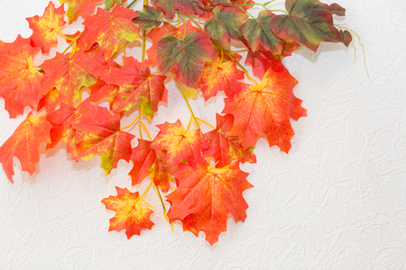 backdrop, nature elements, season concept. on the background of white wall there is floral decoration of the room, bright like flames of a fire branches of autumn maple