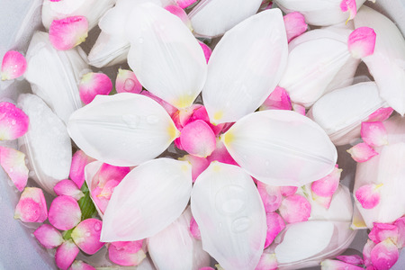 environment, spa, care concept. there is small bath for arms full of water with numerous of petals that fell from white tulips and brunches of oriental cherry