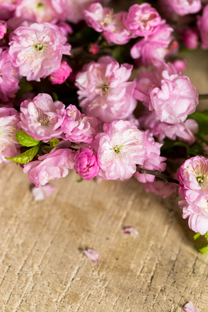 arrangement, environment, trudition concept. on the wooden table of the flower shop there is wonderful blooming brunches of oriental cherry that has gorgeous buds