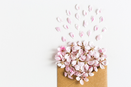 opened craft paper envelope full of spring blossom sakura flowers on white background. top view. concept of blooming pink flowers. Flat lay.