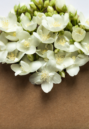 Sprigs of jasmine in postal envelope on white background. copy space. spring mood. mothers day. the freshness of flowers.The inscription on the letter -happy. Top view. Flat lay. Фото со стока