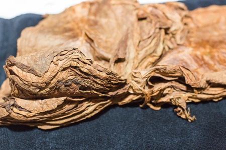 Dry leaves of tobacco for making cigars. Close-up