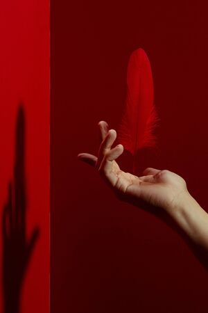 Crop gentle hand levitating soft weightless red feather over against red background