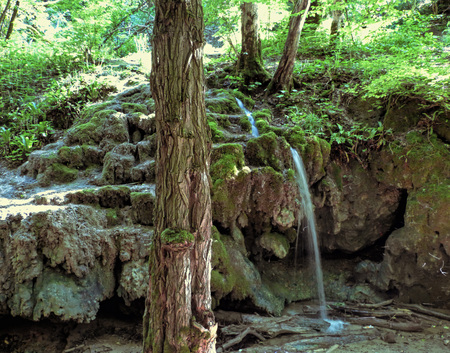 Small waterfall in the forest among moss and rocks. Clear water flow falling down from  aged stones. Big old tree at the front, lot of plants behind. Sunny summer day.