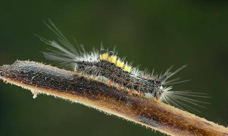 Catterpillar photo