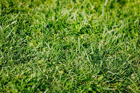 Background of green grass growing on the ground.