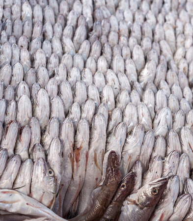 tightly: Fresh fish tightly packed together