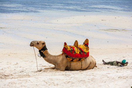 portability: Camel lying on the sand against the backdrop of the ocean and boats