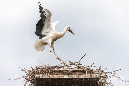 cicogna: Cicogna bianca nel nido contro il cielo blu Archivio Fotografico