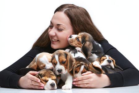 amigos abrazandose: La mujer feliz y gran grupo de unos cachorros beagle en el fondo blanco