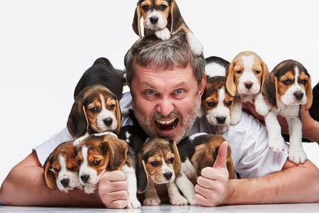 éxtasis: El hombre éxtasis y gran grupo de unos cachorros beagle en el fondo blanco Foto de archivo