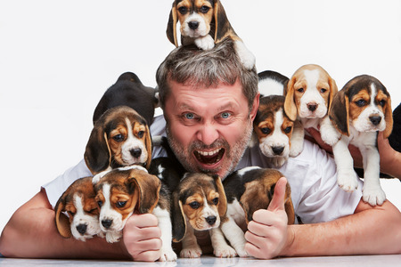 ecstasy: The ecstasy man and big group of a beagle puppies on white background