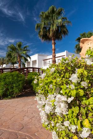 sharm: The tropical garden in Sharm el Sheikh, Egypt.