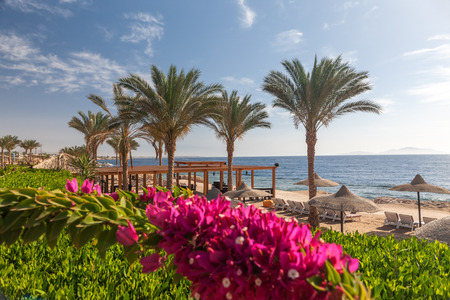 el sheikh: The beach at Sharm el Sheikh, Egypt in the foreground blooming bougainvillea Stock Photo
