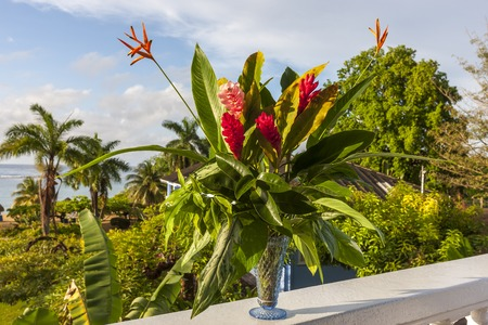 alpinia: A beautiful tropical red ginger and hibiscus flowers. Jamaica