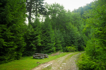 summer trees: Beautiful green pine trees on Carpathian mountains in Ukraine