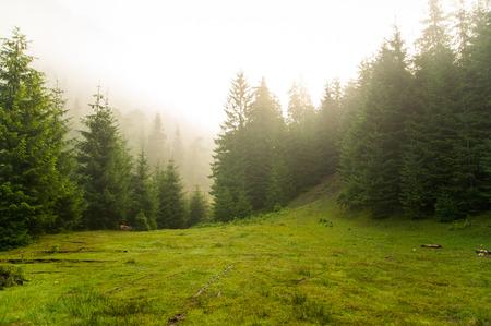 우크라이나대로 산에 아름 다운 녹색 소나무 스톡 콘텐츠