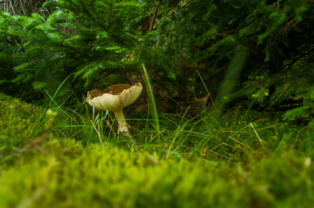 fall mushroom: Fall mushroom in the forest on the grass in the sun Stock Photo