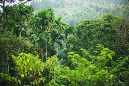 hillsides: The green jungle of Thailand - hillsides and palm trees Stock Photo