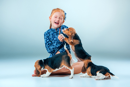 amigos abrazandose: The happy girl and many beagle puppies on gray background Foto de archivo