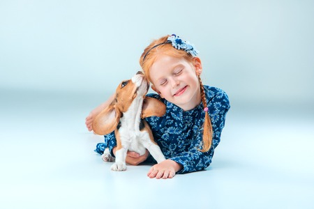 The happy girl and beagle puppie on gray background Stock Photo