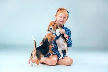 amigos abrazandose: The happy girl and the two beagle puppie on gray background