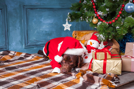 black labrador retriever lying with gifts on Christmas decorations background