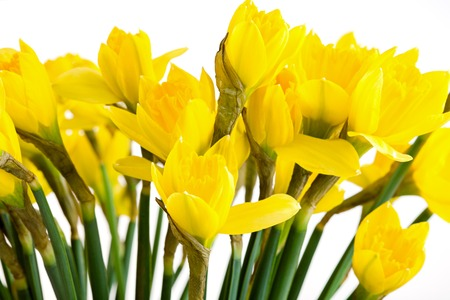 Spring floral border, beautiful fresh daffodils flowers, isolated on white background. Stock Photo