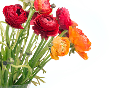 Ranunkulyus bouquet of red flowers on a white background Stock Photo