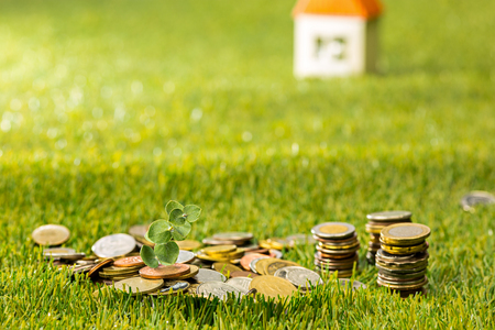 Plant growing in Coins glass jar for money on green grass