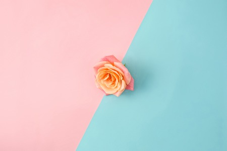 The rose on colorful modern background Stock Photo
