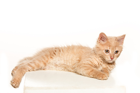 The cat on white background Stock Photo