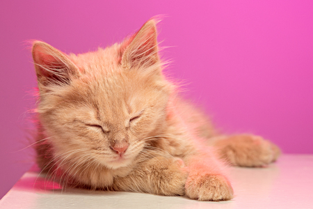 The cat on pink background Stock Photo