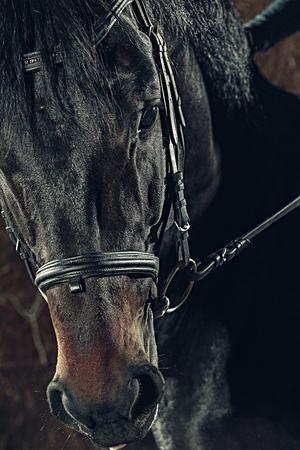 Eyes horses muzzle as a background backdrop or wallpaper. Reklamní fotografie