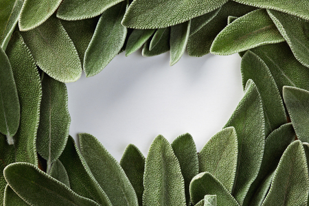 frame of green fresh sage and place for text