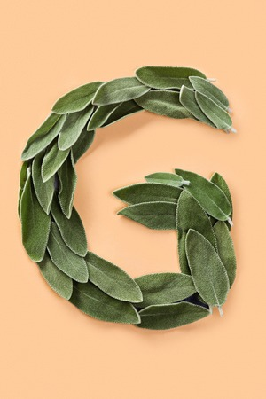Letter G made from green petals of sage