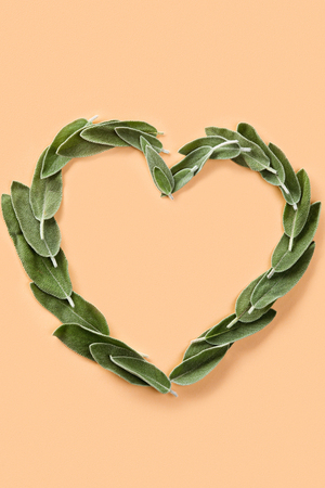 heart shape made from green petals of sage 版權商用圖片