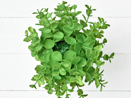 The green plant in pot Stock Photo