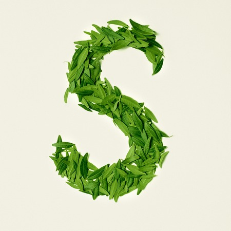 The green dry tea leaf, letter S on white background, top view