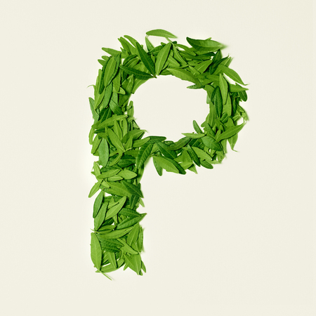 The green dry tea leaf, letter P on white background, top view