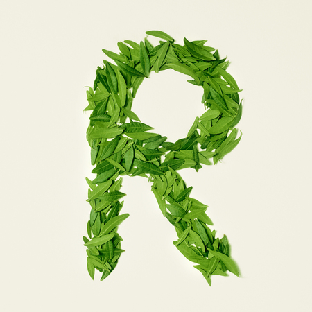 The green dry tea leaf, letter R on white background, top view