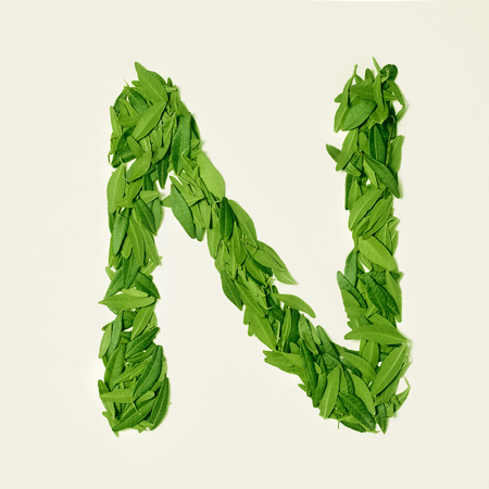 The green dry tea leaf, letter N on white background, top view Stock Photo