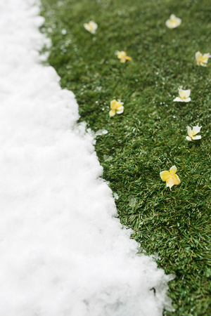 Meeting snow on green grass close up - between winter and spring concept background