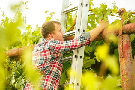 Man  work on a family farm