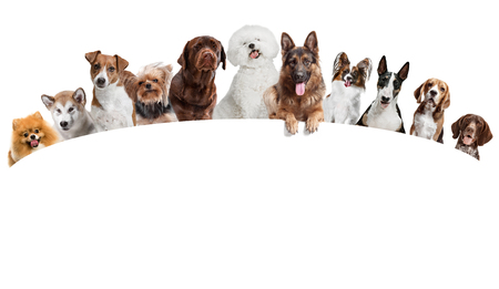 Differents dogs looking at camera isolated on a white studio background Stockfoto