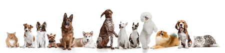 Differents dogs looking at camera isolated on a white studio background 스톡 콘텐츠