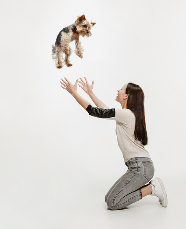 Woman training her dog over white background. Yorkshire terrier at studio against a white. Stock Photo