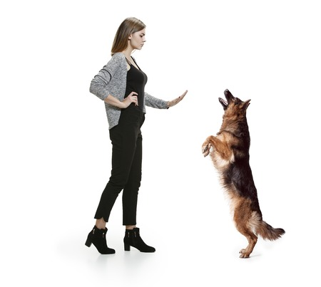 The sad serious woman and her dog over white background. Shetland Sheepdog sitting in front of a white studio background. The concept of humans and animals same emotions Stock Photo