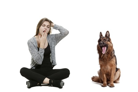 The yawning bored woman and her dog over white background. Shetland Sheepdog sitting in front of a white studio background. The concept of humans and animals same emotions Stock Photo